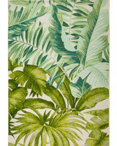 Amazon Jungle 6